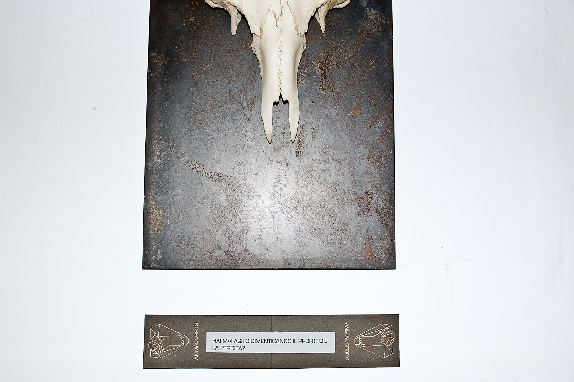 Animal Spirits horns and skull. By Mali Weil