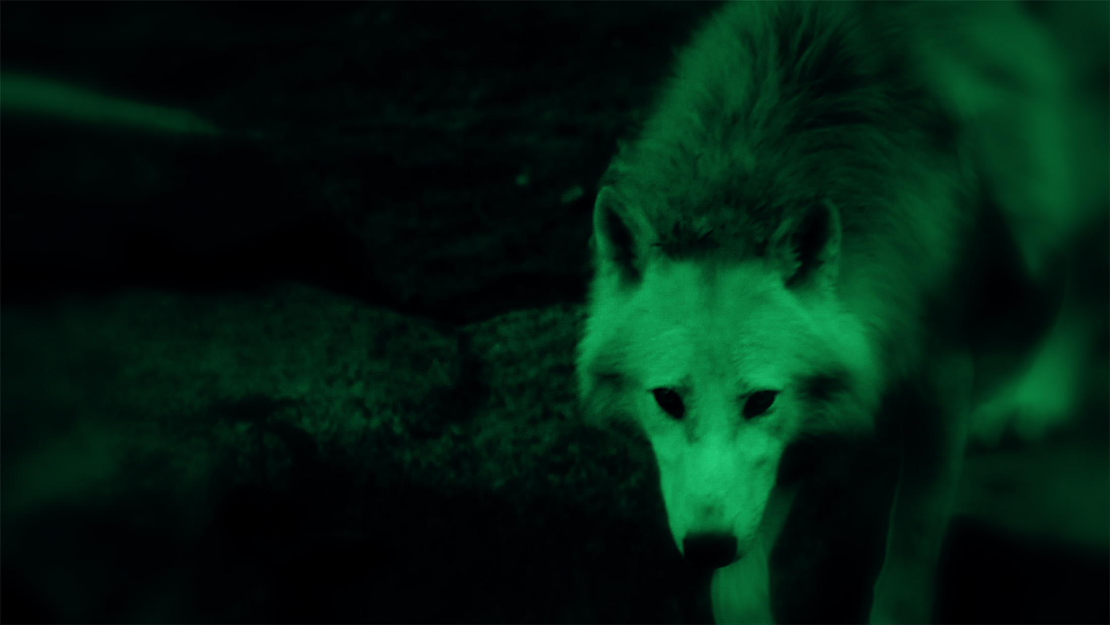 Mali Weil - Animal spirits - video wolf